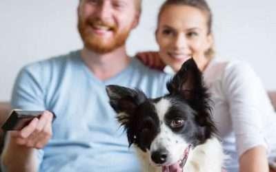 3 tips over hoe je kan besparen op televisie, bellen en internet